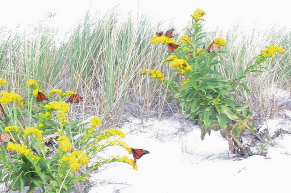 'Kilig'-Butterflies in One'sStomach